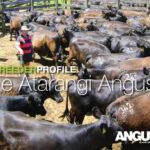 Te-Atarangi-for-facebook